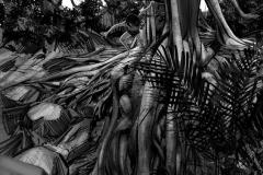 Jonathan_Gesinski_The-Jungle-Book_Mowgli-run_Storyboards_0073