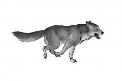 Jonathan_Gesinski_The-Jungle-Book_Mowgli-run_Storyboards_0127