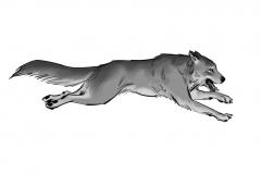Jonathan_Gesinski_The-Jungle-Book_Mowgli-run_Storyboards_0129