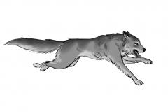 Jonathan_Gesinski_The-Jungle-Book_Mowgli-run_Storyboards_0130