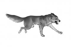 Jonathan_Gesinski_The-Jungle-Book_Mowgli-run_Storyboards_0131