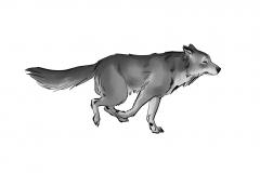 Jonathan_Gesinski_The-Jungle-Book_Mowgli-run_Storyboards_0134