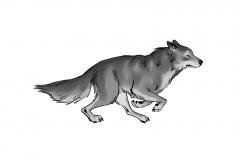 Jonathan_Gesinski_The-Jungle-Book_Mowgli-run_Storyboards_0135