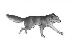 Jonathan_Gesinski_The-Jungle-Book_Mowgli-run_Storyboards_0138