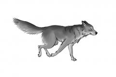 Jonathan_Gesinski_The-Jungle-Book_Mowgli-run_Storyboards_0139