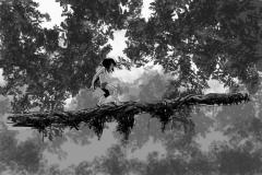 Jonathan_Gesinski_The-Jungle-Book_four_legs01_Storyboards_0013
