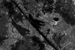 Jonathan_Gesinski_The-Jungle-Book_four_legs01_Storyboards_0023