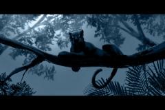 Jonathan_Gesinski_The-Jungle-Book_four_legs_Baloo_framed_Storyboards_0013